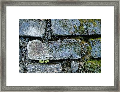 Framed Print featuring the photograph Skc 0301 Tiny Twin Leaves by Sunil Kapadia