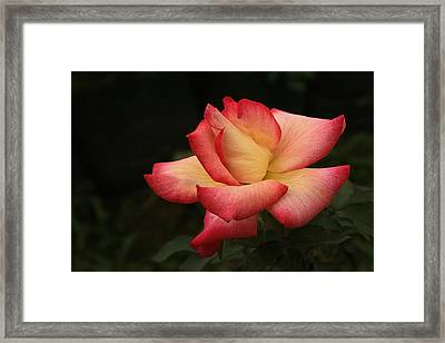 Skc 0432 Blooming And Blossoming Framed Print