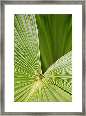 Skc 0691 The Paths Of Palm Meeting At A Point Framed Print by Sunil Kapadia