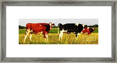 Skrulls Are Patient Framed Print by Ron  Tackett