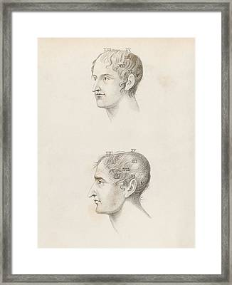 Skull Comparisons In Phrenology Framed Print by King's College London