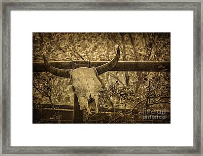 Skull In Sepia Framed Print by Priscilla Burgers