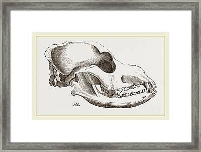 Skull Of A Spaniel Dog Framed Print