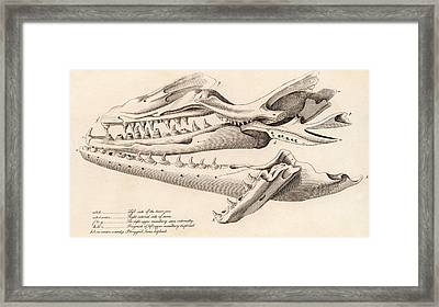 Skull Of Mososaurus Framed Print