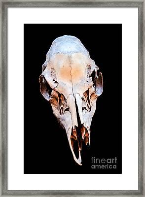 Skull Framed Print by Roselynne Broussard