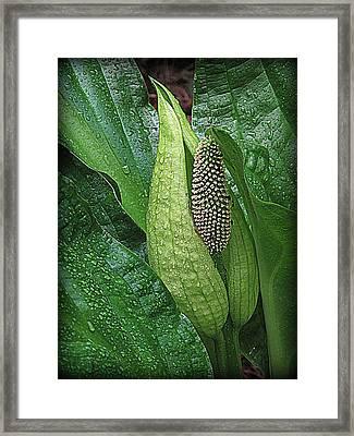 Skunk Beauty Framed Print