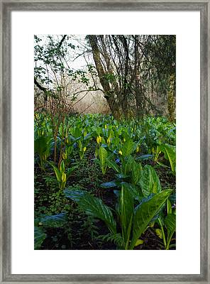 Framed Print featuring the photograph Skunk Cabbages by Adria Trail