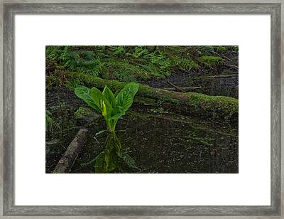 Skunk Weed Cabbage In The Pond Framed Print by Paul W Sharpe Aka Wizard of Wonders