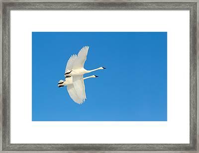 Sky Ballet Framed Print