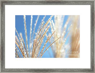 Sky Blooms Framed Print by Kimberly Nickoson