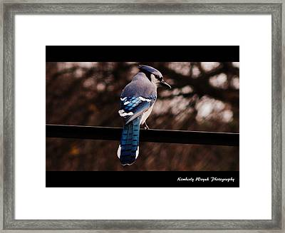Sky Blue Wings Framed Print