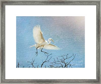 Sky Dancing Framed Print by Betty LaRue