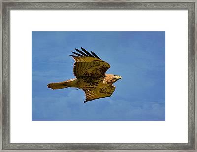 Sky King Framed Print by Fraida Gutovich
