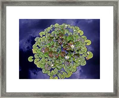 Sky Lilies Framed Print