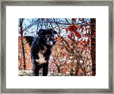 Sky Looking Framed Print