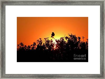 Sky Watcher Framed Print