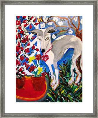 Skylar Miniature Greyhound Framed Print