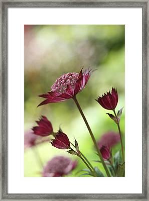 Botanica ..  Skyline Framed Print by Connie Handscomb