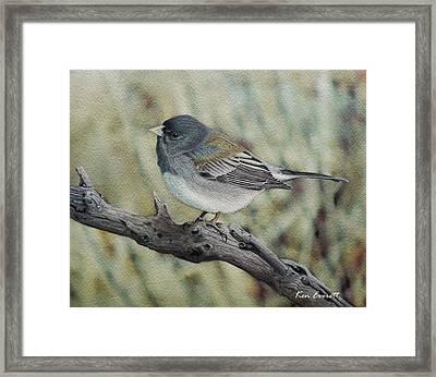 Slate-colored Junco Framed Print by Ken Everett