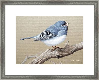 Slate-colored Junco Study Framed Print by Ken Everett