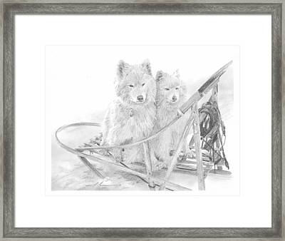 Sled Dogs Riding In Sled Pencil Portrait Framed Print