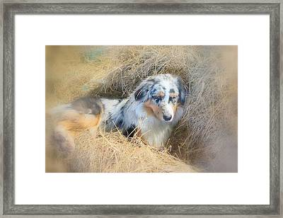 Come Sleep With Me In The Barn She Said  Framed Print
