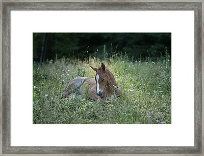 Sleeping Baby Framed Print by Peter Lindsay