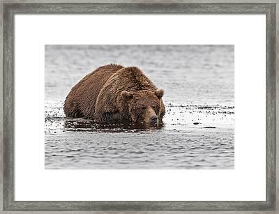 Sleeping Bear  Framed Print by Gary Langley