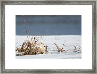 Sleeping Beauty Framed Print by Bill Wakeley