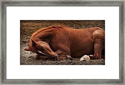 Sleeping Beauty Framed Print by Carey Dils