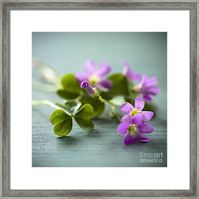 Sleeping Beauty Wild Flower Framed Print by Jan Bickerton
