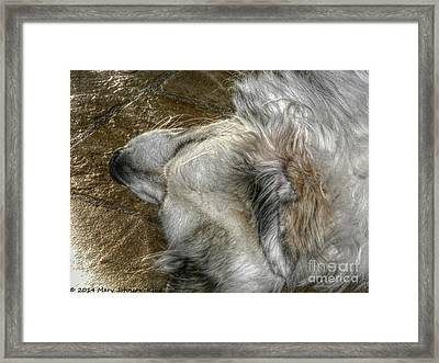 Sleeping Bella Framed Print by Mary  King
