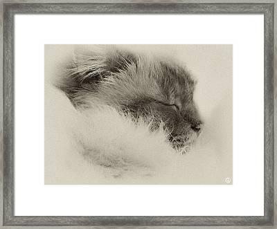 Sleeping Birma Framed Print by Gun Legler