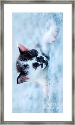 Sleeping Black And White Kitten On Blue Plush Bed Iphone Case Framed Print by Iris Richardson