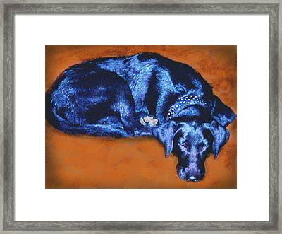 Sleeping Blue Dog Labrador Retriever Framed Print by Ann Powell