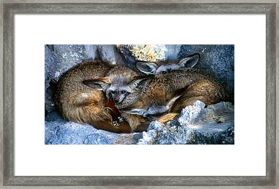 Sleeping Buddies Framed Print by Martin Sullivan