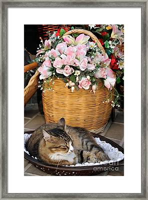 Sleeping Cat At Flower Shop Framed Print