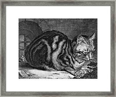 Sleeping Cat Engraving Framed Print by
