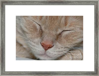 Sleeping Cat Face Closeup Framed Print