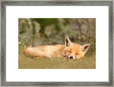 Sleeping Cuty _ Red Fox Kit Framed Print by Roeselien Raimond