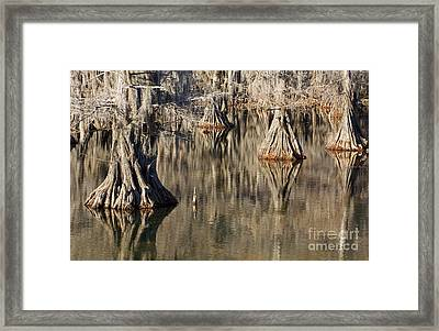 Sleeping Cypress Framed Print