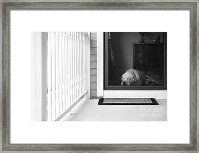 Sleeping Dog Framed Print by Diane Diederich