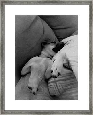 Sleeping Chihuahua Framed Print by Leo Koach