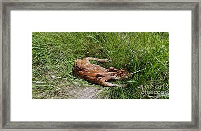 Sleeping Fawn Framed Print by Jon Neidert