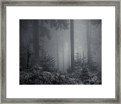 Sleeping Forest   Framed Print by Jaromir Hron
