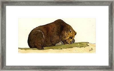 Sleeping Grizzly Bear Framed Print