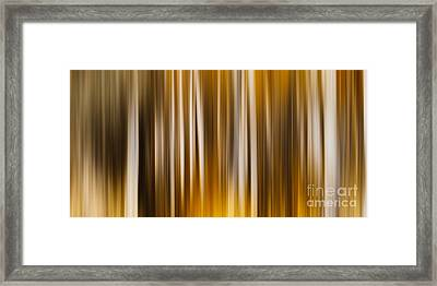 Sleeping In The Forest Framed Print by Sharon Mau