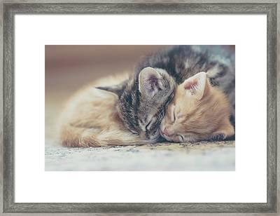 Sleeping Kittens Framed Print by Harpazo hope