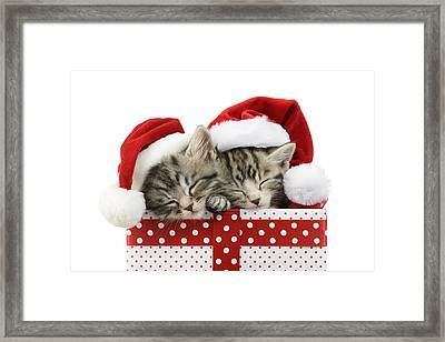 Sleeping Kittens In Presents Framed Print by Greg Cuddiford