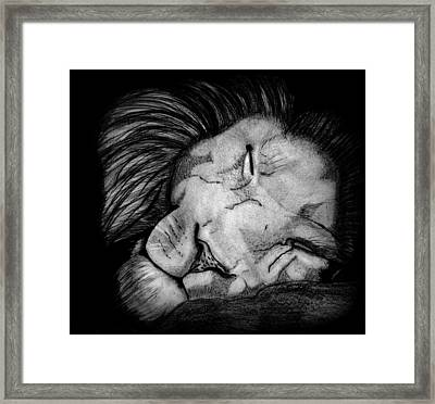 Sleeping Lion Framed Print by Saki Art